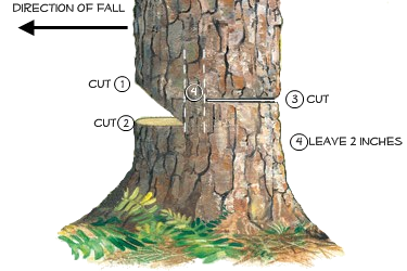 cutting method - felling a tree